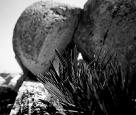 Peppino Impastato antichissimo fiore #839_07